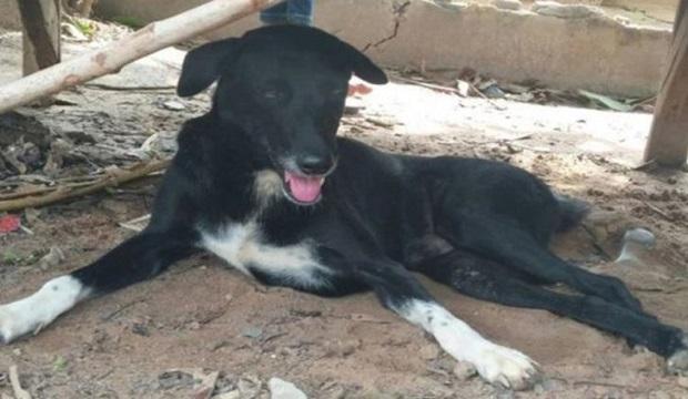 Köpek, Annesi Tarafından Canlı Gömülen Bebeği Kurtardı