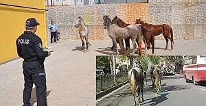 Kahramanmaraş Trafiğine Atlar Karıştı!